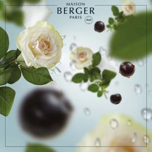 Maison Berger Ocean Breeze Refill