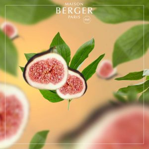 Maison Berger Under the Fig Tree Refill
